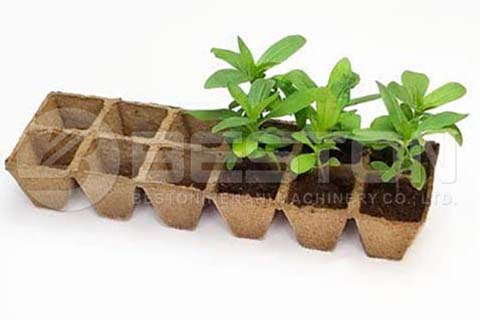 Paper Seedling Tray