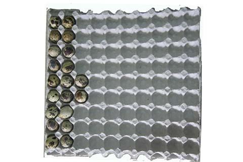 Quail Egg Tray