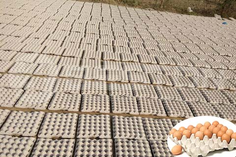 Natural Drying of Egg Trays