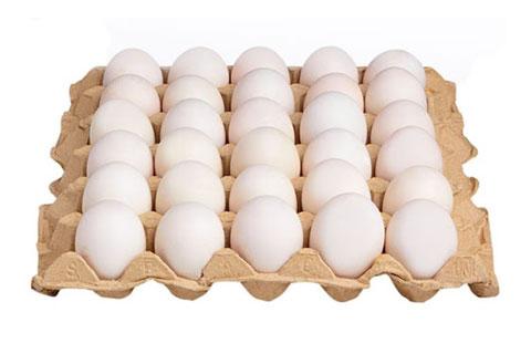 Duck Egg Tray